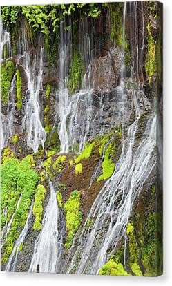 Wa, Gifford Pinchot National Forest Canvas Print by Jamie and Judy Wild