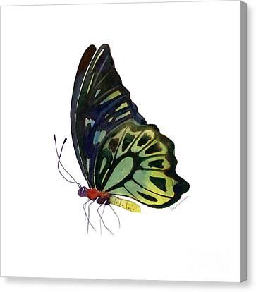 97 Perched Kuranda Butterfly Canvas Print by Amy Kirkpatrick