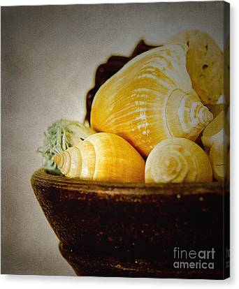 A Bowl Of Shells Canvas Print by MaryJane Armstrong