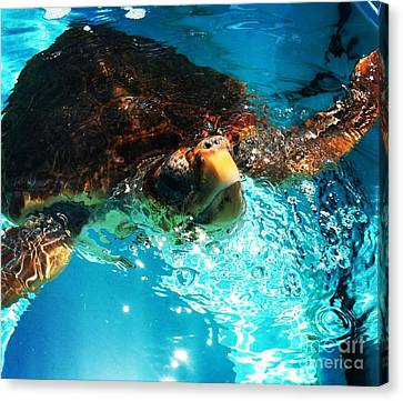 A Breath Of Fresh Air Canvas Print by French Toast