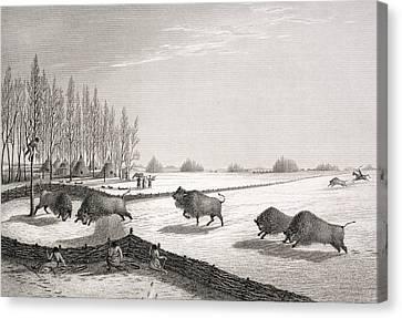 A Buffalo Pound Canvas Print by George Back