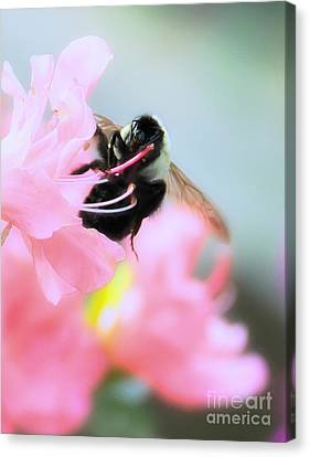 Bumble Bee And Azalea Canvas Print by David Perry Lawrence