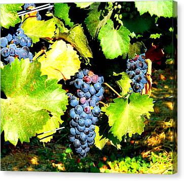 A Bunch Of Grapes Canvas Print by Kay Gilley