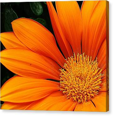 A Burst Of Orange Canvas Print by Bruce Bley