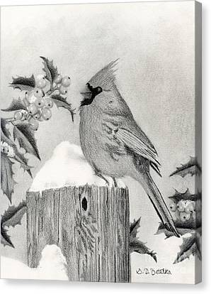 A Cardinal And Holly Canvas Print by Sarah Batalka