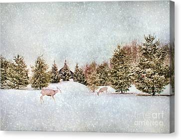 A Cold Winters Day Canvas Print by Darren Fisher
