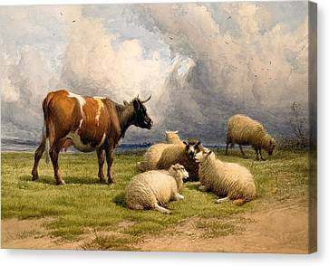 A Cow And Five Sheep Canvas Print by Thomas Sidney Cooper