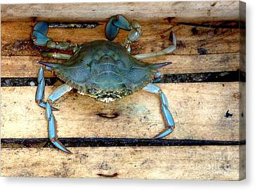 A Crab In A Wooden Box Canvas Print by Olga R