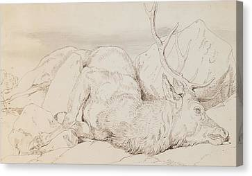 A Dead Stag Canvas Print by Sir Edwin Landseer
