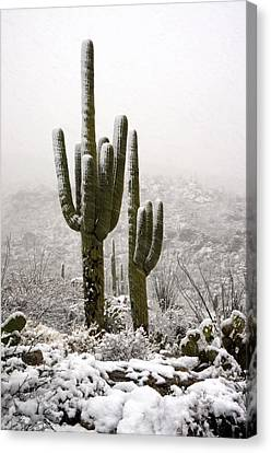 A Desert Southwest Snow Day  Canvas Print by Saija  Lehtonen