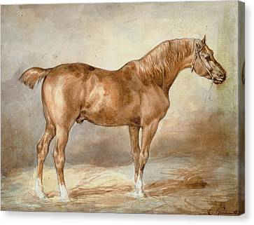 A Docked Chestnut Horse Canvas Print by Theodore Gericault