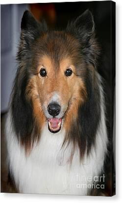A Dog Named Beau Canvas Print by Karen Adams