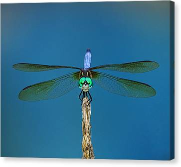 A Dragonfly IIi Canvas Print by Raymond Salani III