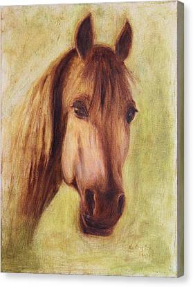 A Fine Horse Canvas Print by Xueling Zou