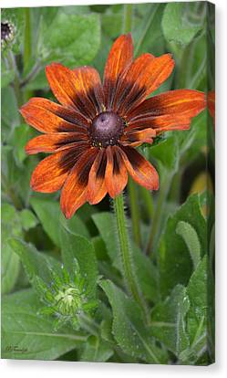 A Flower Within A Flower Canvas Print by Patricia Twardzik