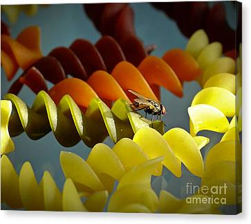 A Fly In My Pasta Canvas Print by Robert Frederick