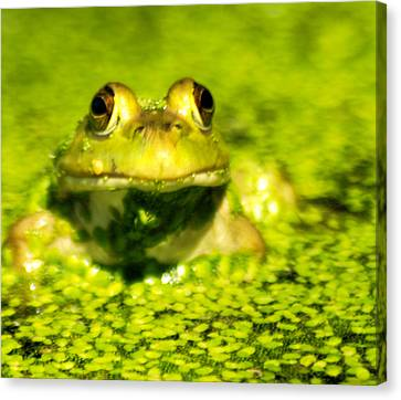 A Frogs Day Canvas Print by Optical Playground By MP Ray
