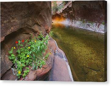 A Frogs Rest Canvas Print by Peter Coskun
