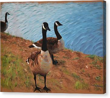 A Gaggle Of Ganders Canvas Print by Christopher Reid
