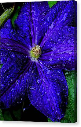 A Gentle Rain Canvas Print by Frozen in Time Fine Art Photography
