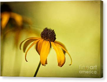 A Gift From August Canvas Print by Lois Bryan
