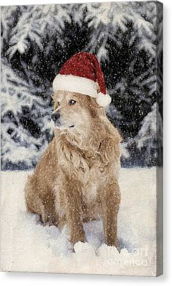 A Golden Christmas Canvas Print by Darren Fisher