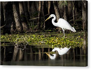 A Great Egret In Tranquility  Canvas Print by Ellie Teramoto