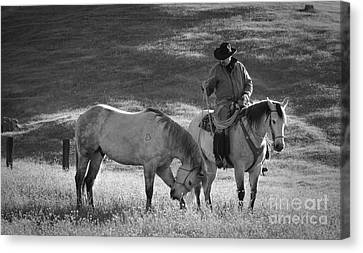 A Kind Moment Canvas Print by Sandra Bronstein