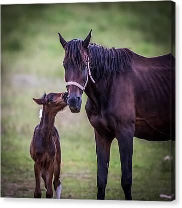A Kiss For Mom Canvas Print by Paul Freidlund