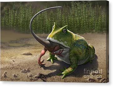A Large Beelzebufo Frog Eating A Small Canvas Print by Sergey Krasovskiy