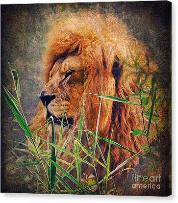A Lion Portrait Canvas Print by Angela Doelling AD DESIGN Photo and PhotoArt