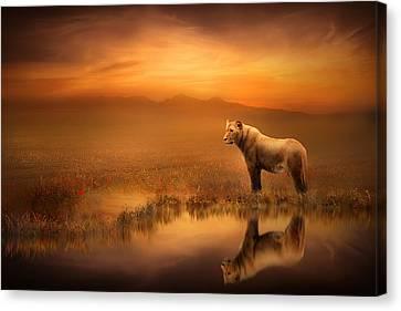 A Lion's World Canvas Print by Jennifer Woodward