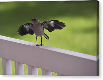 A Little Visitor Northern Mockingbird Canvas Print by Terry DeLuco