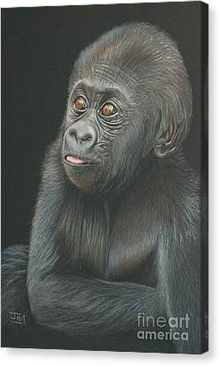 A Look Of Wonder - Baby Gorilla Canvas Print by Jill Parry