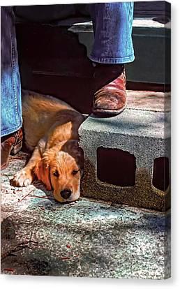 A Man And His Dog Canvas Print by Steve Harrington
