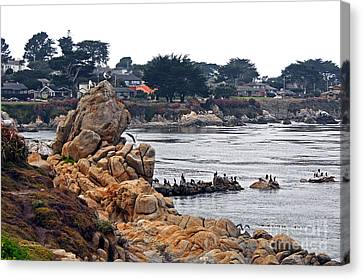 A Misty Day At Pacific Grove Canvas Print by Susan Wiedmann