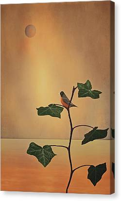 A Moment Of Zen Canvas Print by Tom York Images