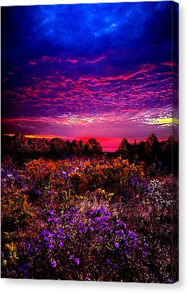 A Moment Canvas Print by Phil Koch
