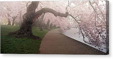 A Morning To Remember Canvas Print by Bernard Chen