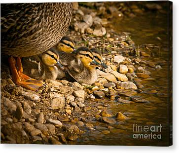 A Mother's Love Canvas Print by Robert Frederick