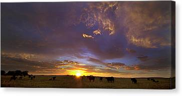 A New Dawn  Canvas Print by Steven Reed