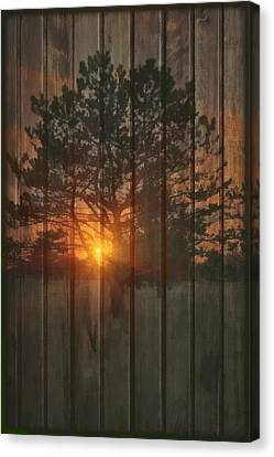 A New Tree Canvas Print by Tom York Images