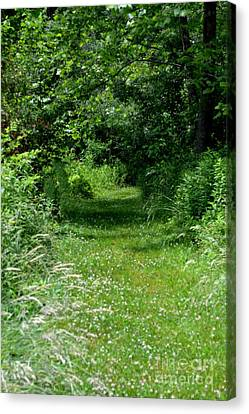 A Path Of Clover Canvas Print by Eva Thomas
