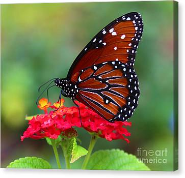 A Queen Canvas Print by Marty Fancy
