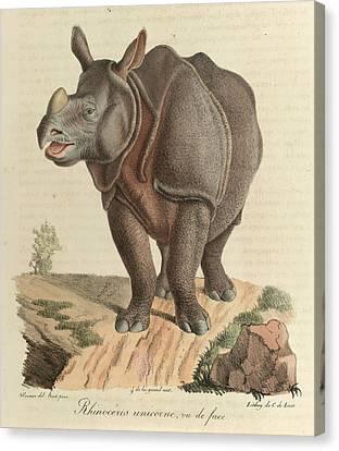 A Rhinoceros Canvas Print by British Library