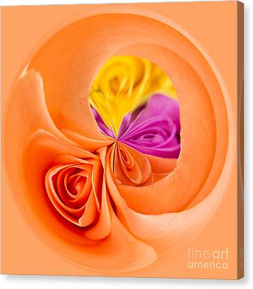 A Round Of Roses Canvas Print by Anne Gilbert
