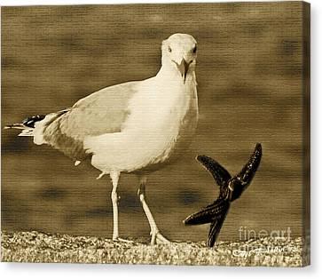 A Seagull Kind Of Day Canvas Print by Carol F Austin