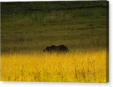 A Silver Back Canvas Print by Jeff Swan