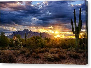 A Sonoran Desert Sunrise Canvas Print by Saija  Lehtonen