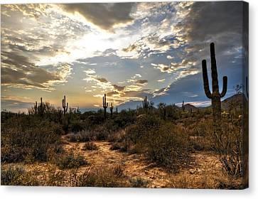 A Sonoran Desert Sunset  Canvas Print by Saija  Lehtonen